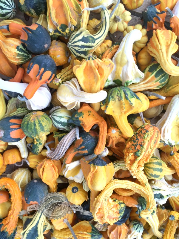 Gourds, Kimberly Van Diepen,